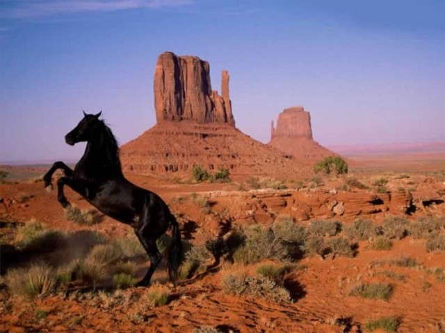 strong-horse-rearing-in-desert
