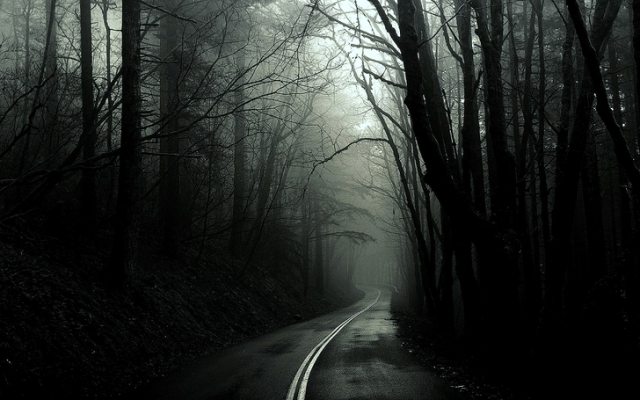 black and white trees dark forest roads monochrome_www.wallpaperfo.com_42